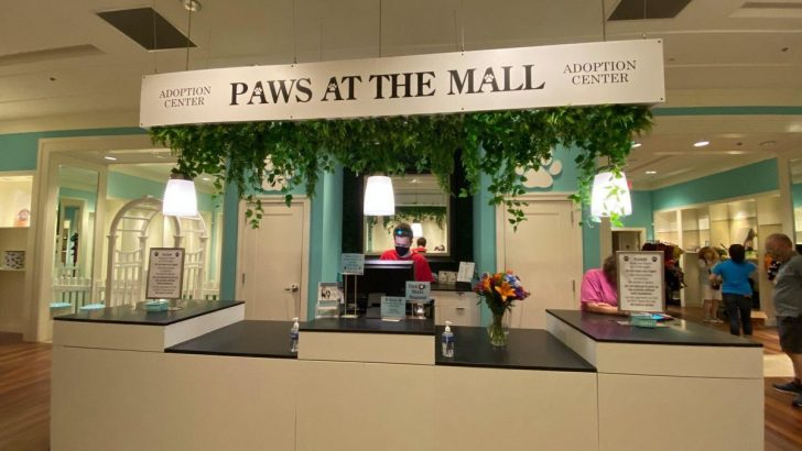 """Paws at the Mall"" – The SPCA Opens New Adoption Center in Annapolis Mall"